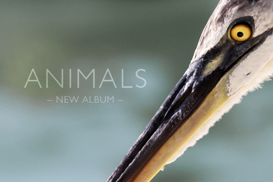 blog_04_animals